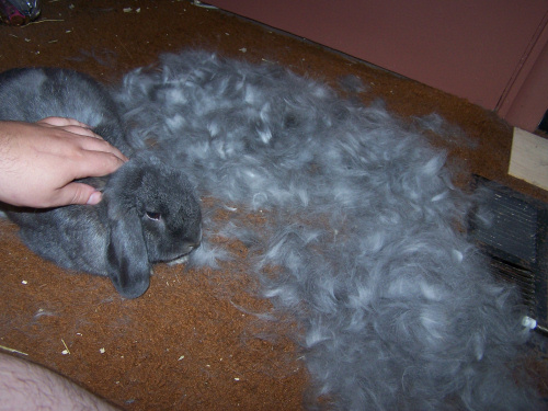 bunny_fur_1